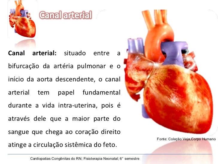 Canal arterial:  situado entre a bifurcação da artéria pulmonar e o início da aorta descendente, o canal arterial tem pape...