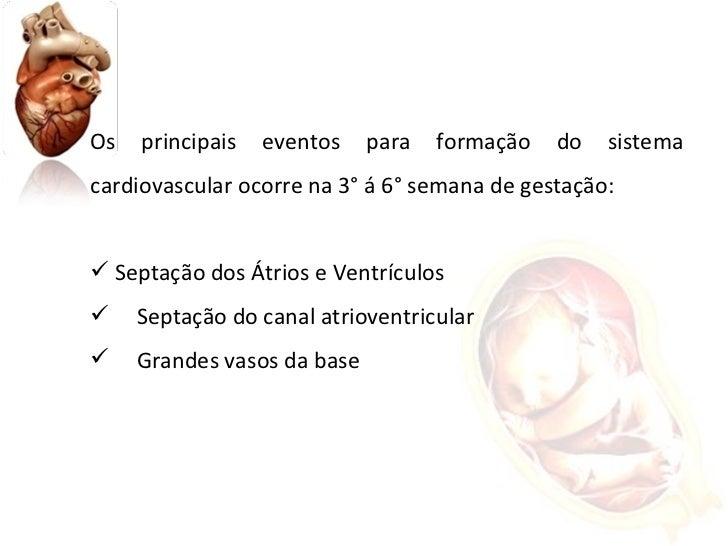 <ul><li>Os principais eventos para formação do sistema cardiovascular ocorre na 3° á 6° semana de gestação: </li></ul><ul>...