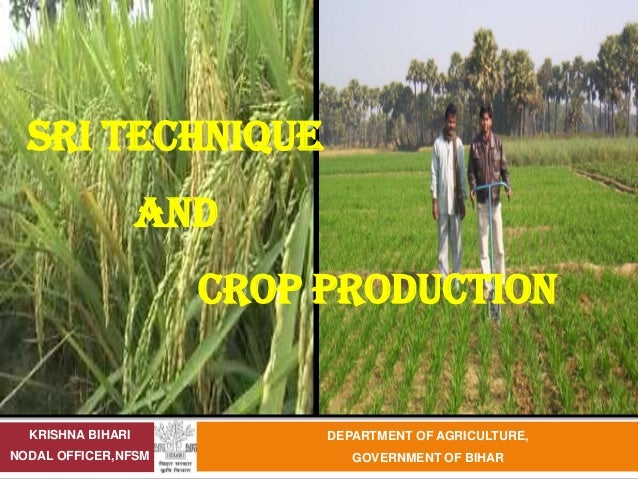 SRI TECHNIQUE                   AND                     CROP PRODUCTION  KRISHNA BIHARI          DEPARTMENT OF AGRICULTURE...