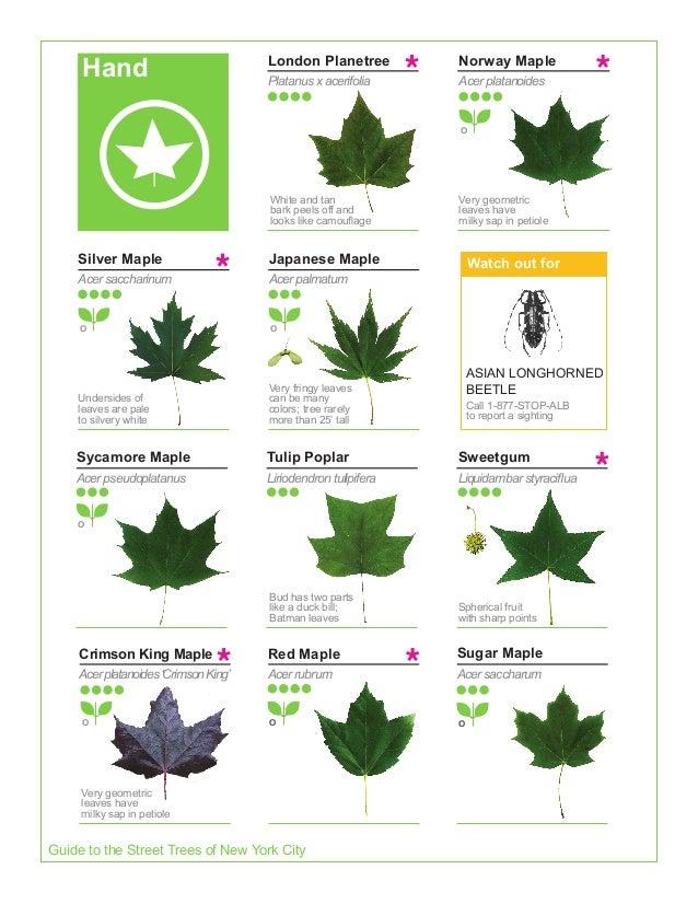 2015 Street Tree Guide Evergreen Version 150325
