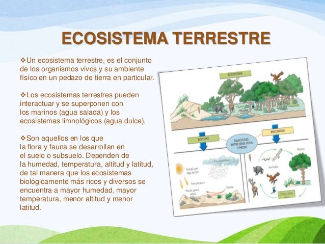 Ecosistema terrestre for Como se forma y desarrolla el suelo
