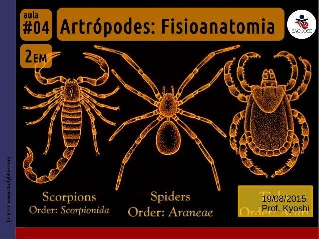 #04 19/08/2015 Prof. Kyoshi Imagem:www.studyblue.com 2EM Artrópodes: Fisioanatomia aula