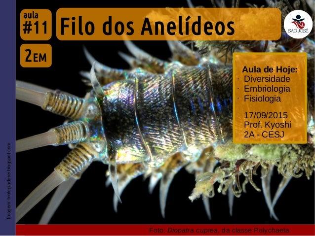 #11 17/09/2015 Prof. Kyoshi 2A - CESJ Imagem:biologiadorei.blogspot.com Aula de Hoje: • Diversidade • Embriologia • Fisiol...