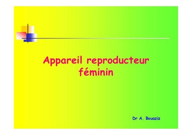 Appareil reproducteur féminin Dr A. Bouaziz