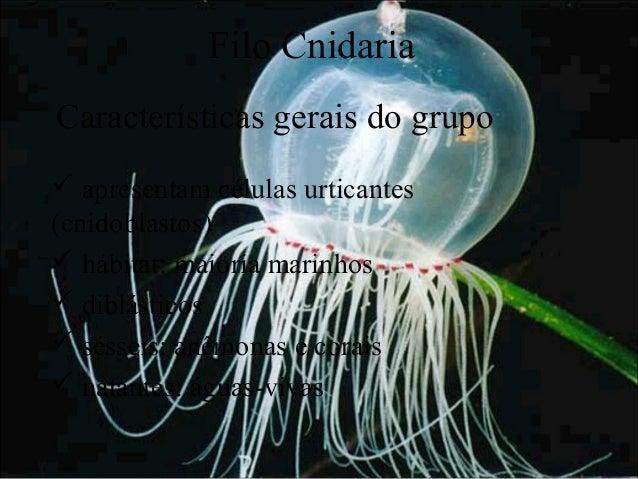 Filo Cnidaria Características gerais do grupo  apresentam células urticantes (cnidoblastos)  hábitat: maioria marinhos ...