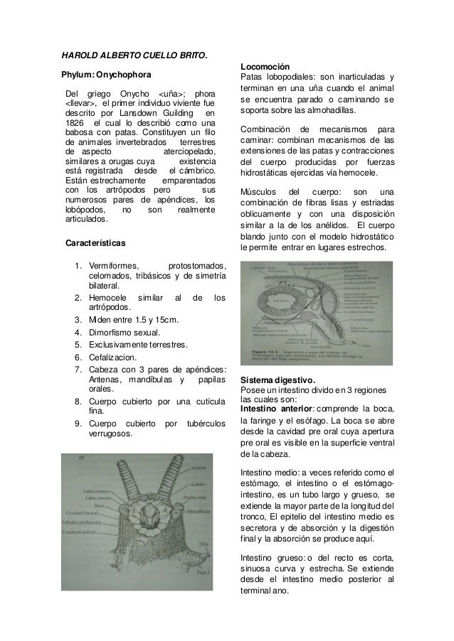 Resumen phylum onychophora harold cuello