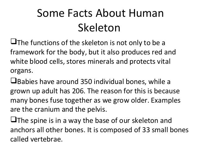 human skeleton number of bones – citybeauty, Skeleton