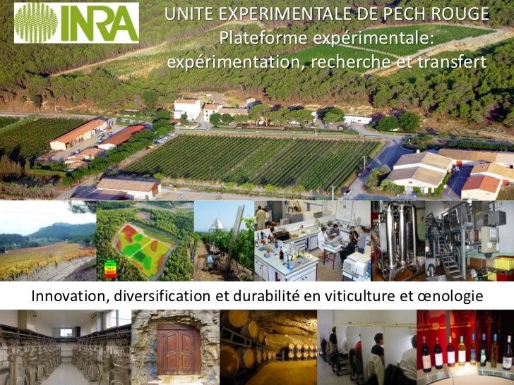 UNITE EXPERIMENTALE DE PECH ROUGE                         Plateforme expérimentale:                   expérimentation, rec...