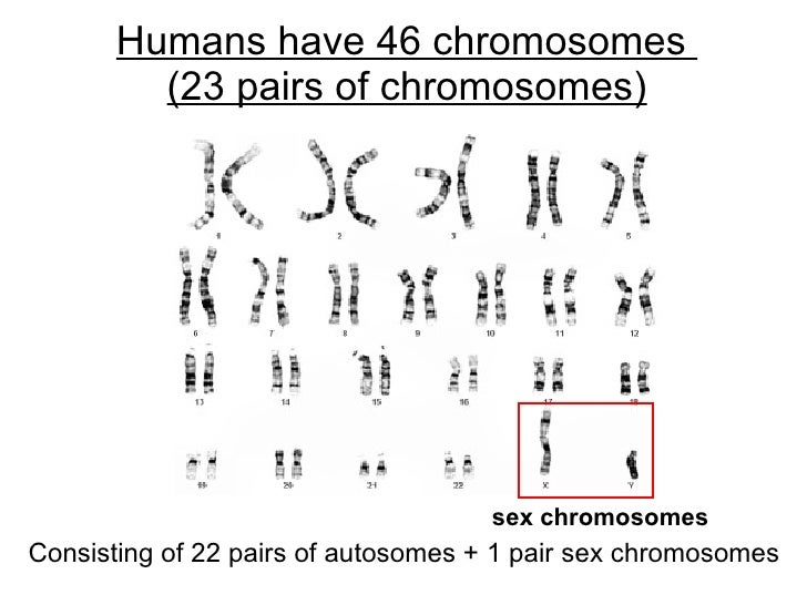 5 es engage for sex chromosomes lesson