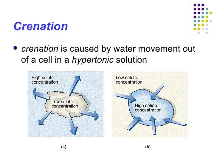 biology osmosis coursework potato