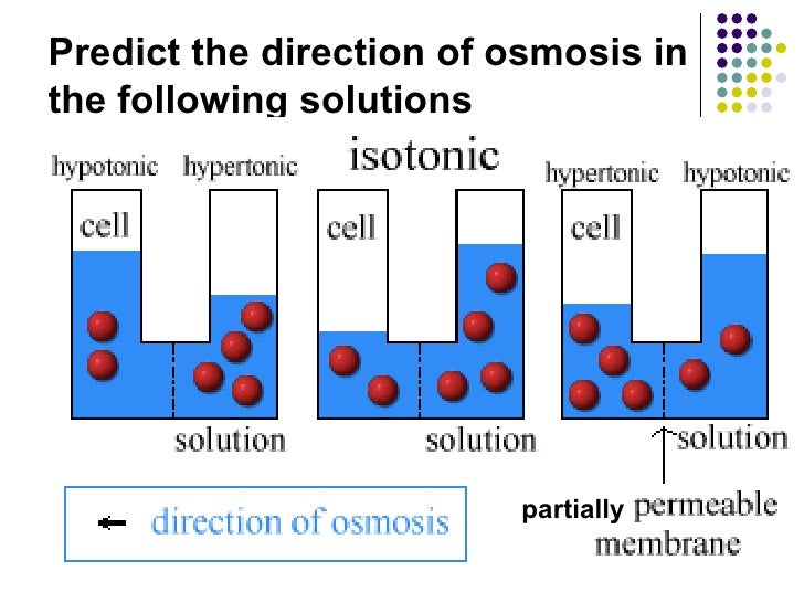 Effect of Osmosis on Potato Essay