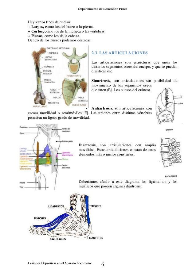 Dorable Huesos En Diagrama De Cuerpo Friso - Anatomía de Las ...