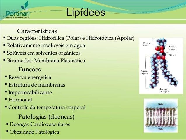 Lipídeos      Características Duas regiões: Hidrofílica (Polar) e Hidrofóbica (Apolar)                                   ...