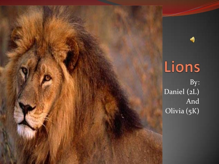 Lions<br />By: <br />Daniel (2L)<br />And <br />Olivia (5K)<br />