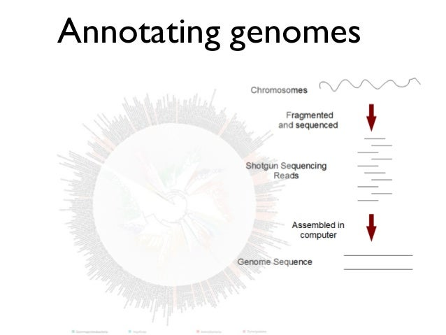 Annotating genomes