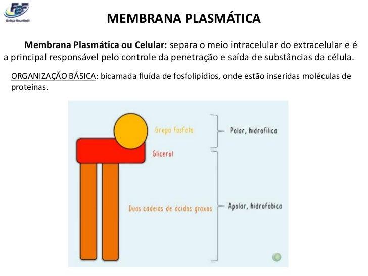 MEMBRANA PLASMÁTICA     Membrana Plasmática ou Celular: separa o meio intracelular do extracelular e éa principal responsá...