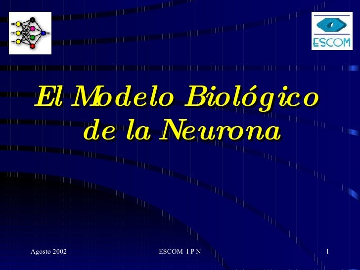 El Modelo Biológico  de la Neurona