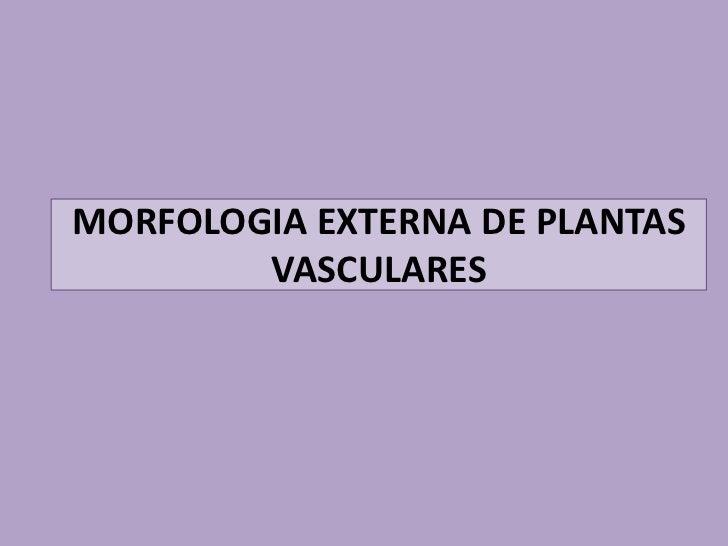 MORFOLOGIA EXTERNA DE PLANTAS        VASCULARES