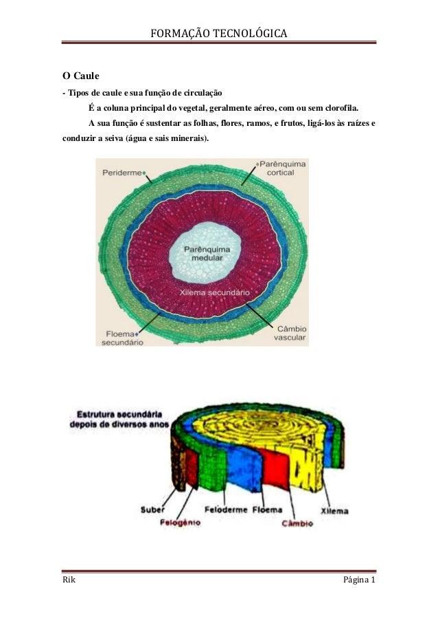 FORMAÇÃO TECNOLÓGICARik Página 1O Caule- Tipos de caule e sua função de circulaçãoÉ a coluna principal do vegetal, geralme...