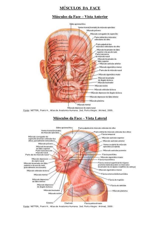 MÚSCULOS DA FACE Músculos da Face – Vista Anterior  Fonte: NETTER, Frank H.. Atlas de Anatomia Humana. 2ed. Porto Alegre: ...