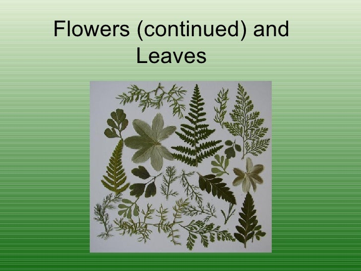 Flowers (continued) and Leaves