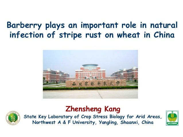 Barberry plays an important role in natural infection of stripe rust on wheat in China Zhensheng Kang State Key Laboratory...