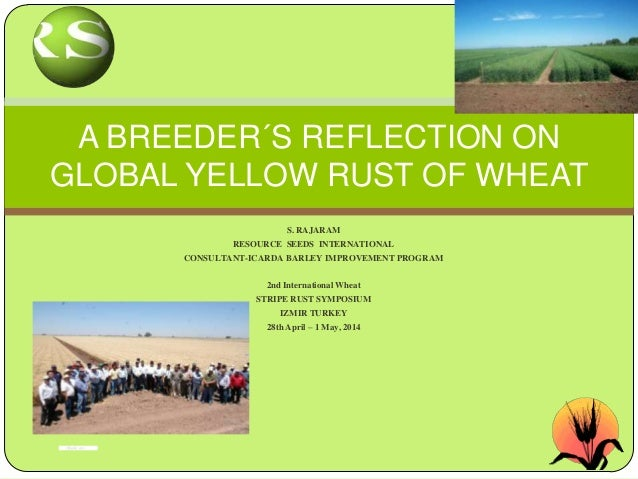 S. RAJARAM RESOURCE SEEDS INTERNATIONAL CONSULTANT-ICARDA BARLEY IMPROVEMENT PROGRAM 2nd International Wheat STRIPE RUST S...