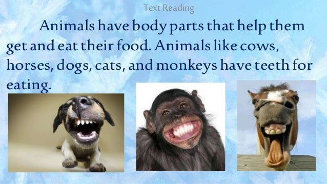 how animals eat their food 2018-6-10 how do animals obtain food a:  that fungi absorb food from their immediate surroundings directly through their cell walls unlike animals, which eat food,.