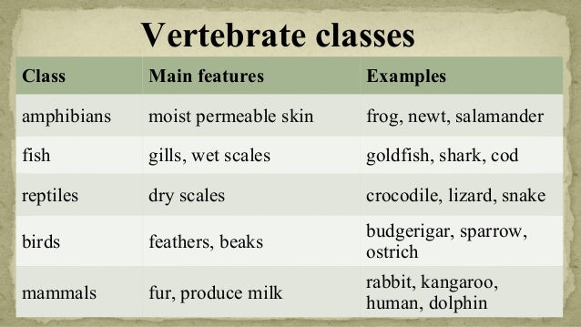 Facts About Reptiles For Kids   Characteristics of Reptiles   Classification of Reptiles