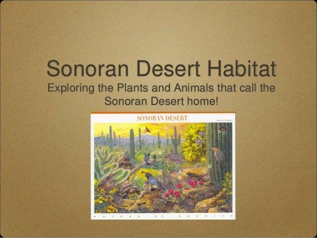 Sonoran Desert Habitat Exploring the Plants and Animals that call the Sonoran Desert home!
