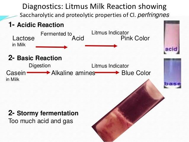 Litmus Milk Test