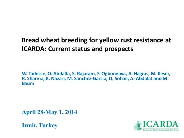 Bread wheat breeding for yellow rust resistance at ICARDA: Current status and prospects W. Tadesse, O. Abdalla, S. Rajaram...