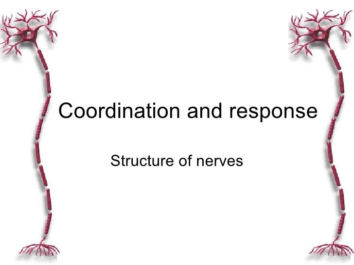 Structure of nerves Coordination and response