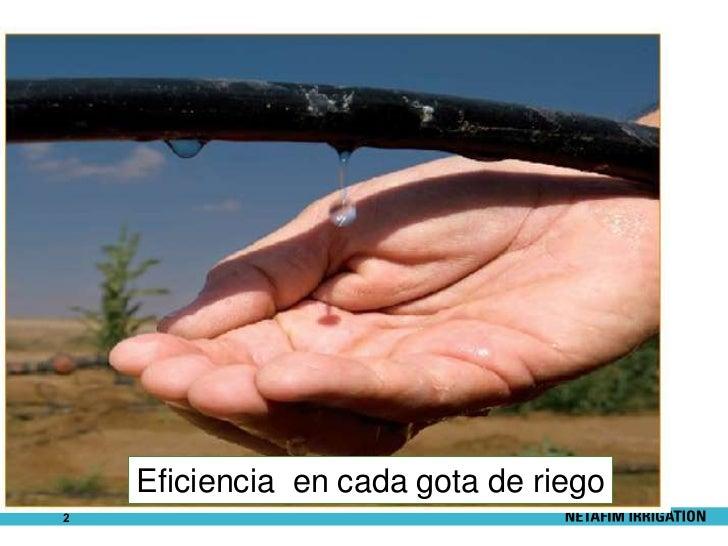 """""""NUEVAS TENDENCIAS Y SOLUCIONES EN EL RIEGO POR GOTEO"""" Slide 2"""