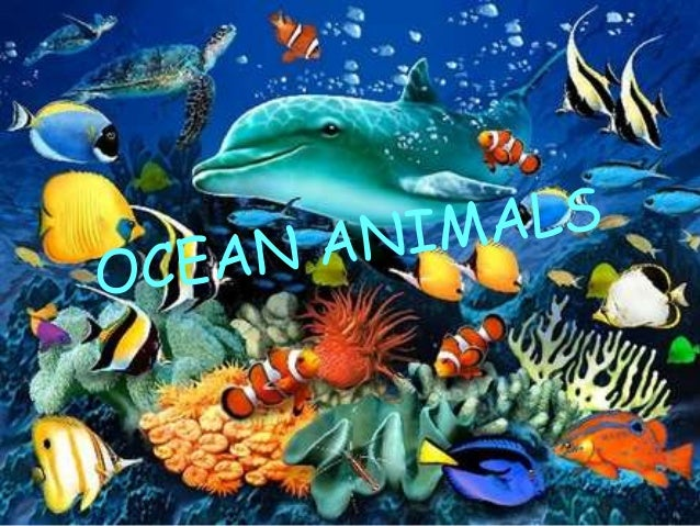 Theinternetvshollywood Ocean Animals 1 Sea Horse Jellyfish Dolphin Turtle Slideshare Ocean Animals