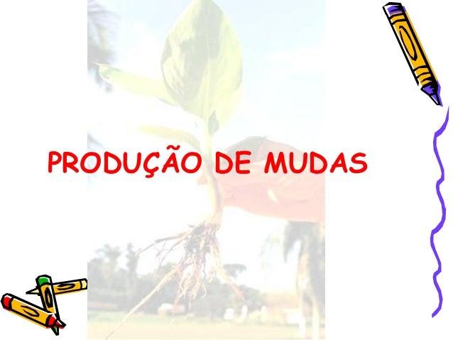 PRODUÇÃO DE MUDAS
