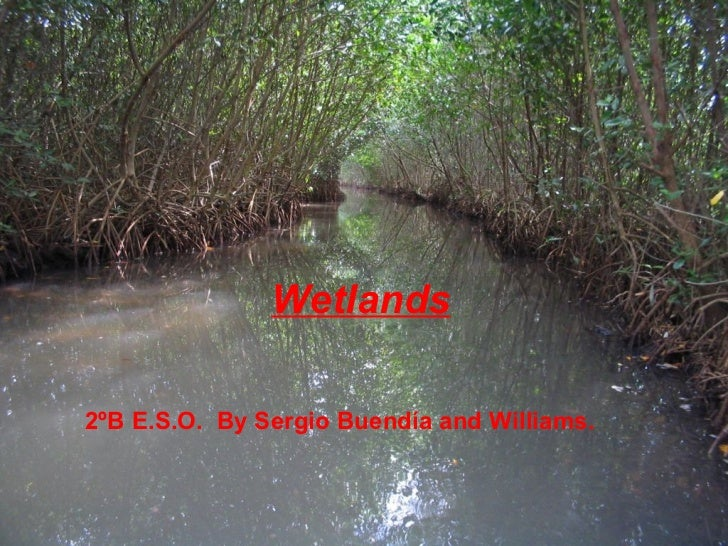 2ºB E.S.O.  By Sergio Buendía and Williams. Wetlands