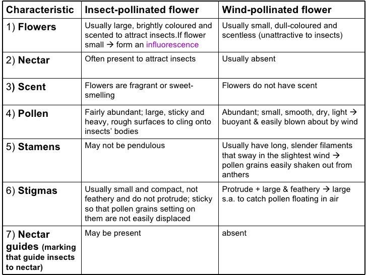 19 Flower Diagram Worksheet – Pollination Worksheet