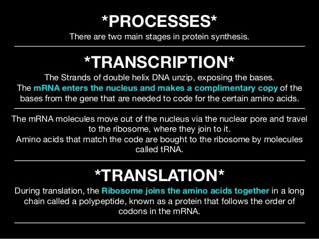 2 phases of protein synthesis