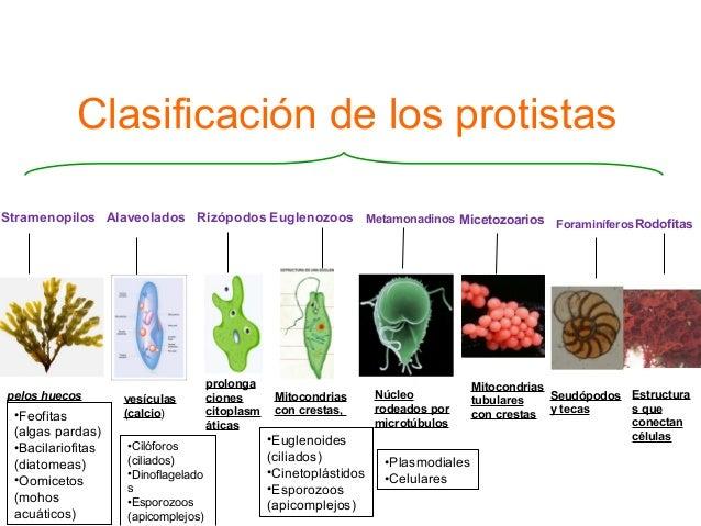 clasificaciones de los corticosteroides