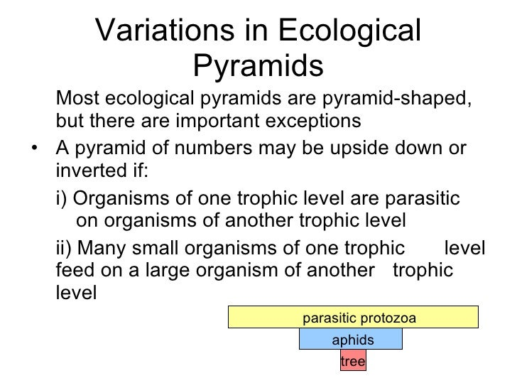 Chapter 21 Ecology Lesson 2 Pyramid of numbers biomasscarbon cycle – Ecological Pyramids Worksheet