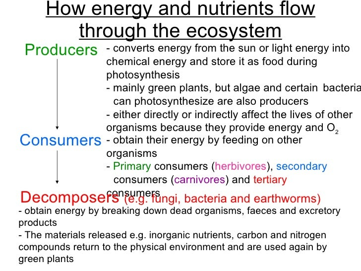 Chapter 21 Ecology Lesson 2 Pyramid of numbers biomasscarbon cycle – Energy Flow in Ecosystems Worksheet