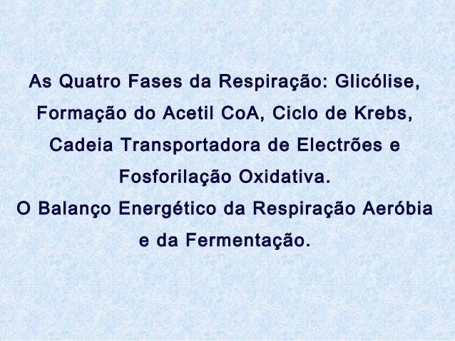 As Quatro Fases da Respiração: Glicólise, Formação do Acetil CoA, Ciclo de Krebs, Cadeia Transportadora de Electrões e Fos...
