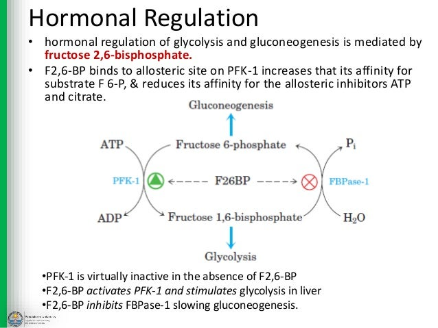 glycolysis regulation Regulation of glucose uptake the rate of entry of glucose into a cell is limited by the number of glucose transporters on the cell surface and the affinity of the transporters for glucose.