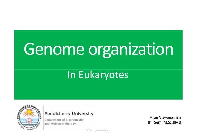 Genomeorganization In EukaryotesIn Eukaryotes Arun Viswanathan IInd Sem, M.Sc.BMB © Arun Viswanathan
