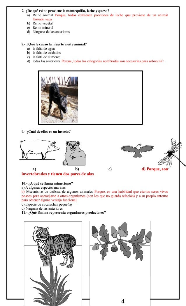 2º simce 8 c.naturaleza (2) Slide 2