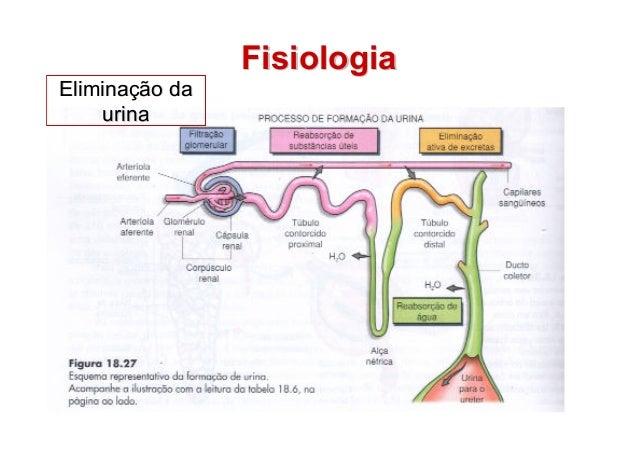 2 sistema renal dialise e hemodialise fisiologiafisiologia eliminaeliminao dao da urinaurina ccuart Choice Image