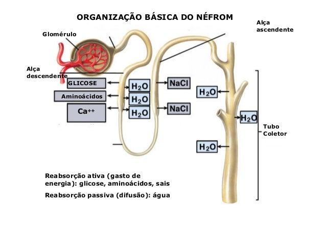 2 sistema renal dialise e hemodialise 2 sistema renal dialise e hemodialise ccuart Choice Image