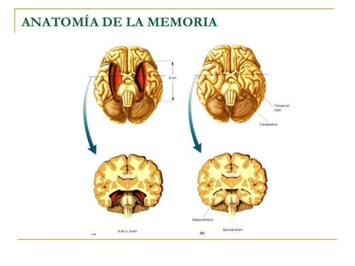 Anatomia De La Capacidad De Memoria – Bloggy Business