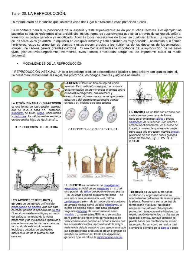 Ciclostomos reproduccion asexual de las plantas